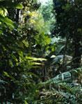 THOMAS STRUTH, PARADISE 01 (PILGRIM SANDS), DAINTREE / AUSTRALIEN 1998, (232,7 X 185,0) cm - © 2007 THOMAS STRUTH