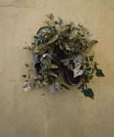 Lawrence Carroll, Untitled. Shoe painting, 1999-2000 - Olio, cera, scarpe, edera e tela su legno / oil, wax, shoes, ivy and canvas on wood - cm 243×182×8 - Collezione privata