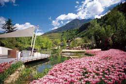 Tulipani in fiore nel Giardino giapponese - Manuela Prossliner   I Giardini di Castel Trauttmansdorff