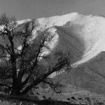 Tiziano Terzani, Primavera nel regno del Mustang: albero e monte innevato