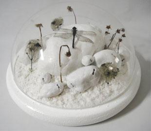 Tamara Ferioli, Threshold, 2011, 35 cm (diametro) x 18 cm (altezza), gesso, vegetali, garza, polpa di cellulosa e libellula (morta per cause naturali) su legno e plexiglass