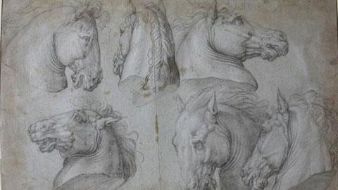 Giorgio Vasari Studi di teste di cavalli Matita nera su carta azzurra, 280x430 mm Parigi, Musée du Louvre, Département des Arts Graphiques