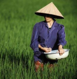 Vietnam, cultura di riso e bambù