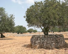 De agri cultura. Paesaggi rurali storici