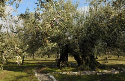 Frantoi Aperti: Giano dell'Umbria