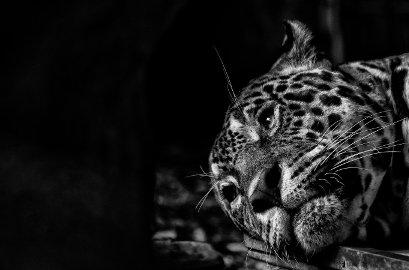 Claudia Oliva, Zoo: quadri d'autore