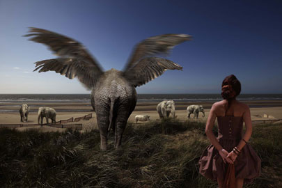 Bart Herreman, Elefanti a Oostende, anno 2008, cm 120 x 180