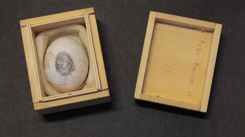 Uovo scultura n.21, 1960, uovo in scatola di legno, 5,7x8,2x6,7 cm, Milano, Fondazione Piero Manzoni in collaborazione con Gagosian Gallery