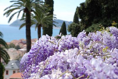 Giardini di Villa della Pergola, glicini