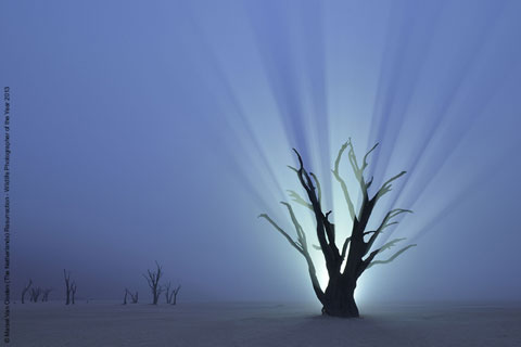 © Marsel Van Oosten (The Netherlands) Resurrection, Wildlife Photographer of the Year 2013, Creative Visions / Visioni creative, Commended