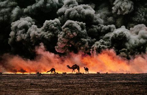 Cammelli e giacimenti di petrolio, Kuwait, 1991, ©Steve McCurry