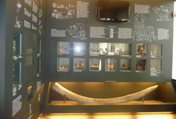 Museo Casal de Pazzi