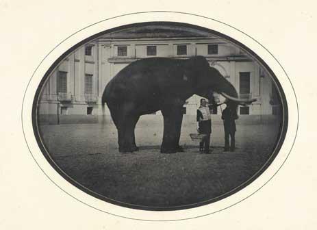 Anonimo (Marchese Curlo Faustino). L'elefante di Torino, che poi morì pazzo-Espone il M.se Faustino Curlo, 1850, dagherrotipo, cm 11,1 x 15,1, Collezione Simeom, C 4400, su concessione dell'Archivio Storico della Città di Torino