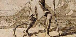 morso del serpente