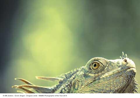 Will Jenkins, Dragone verde