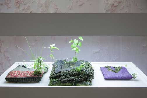 Michel Blazy: Pull over time, 2013, pullover, sweatshirts, plants, water