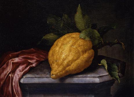 Bartolomeo Bimbi, Cedrato gigante su una base di marmo, ante 1713, olio su tela