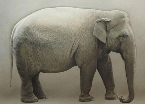 Marzio Tamer, E. Elefante, 2012 Olio su tela 178 x 220 cm