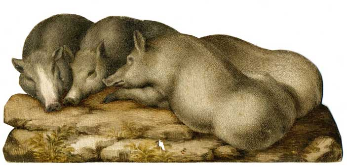Sinibaldo Scorza: Cuccioli di cinghiale. Acquerello e tempera su carta, 88 x 198 mm. Collezione privata