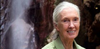 Jane Goodall al National Geographic Festival delle Scienze