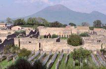 Vendemmia al Parco Archeologico di Pompei