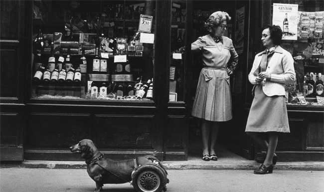 Robert Doisneau, Un chien à roulettes, 1977 © Atelier Robert Doisneau