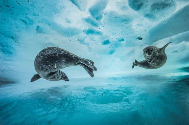 Swim gym © Laurent Ballesta - Wildlife Photographer of the Year