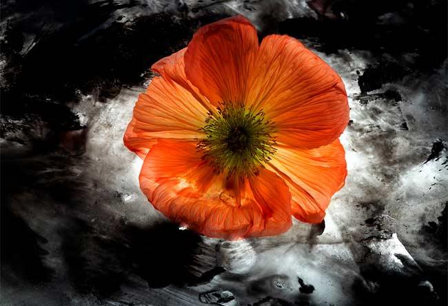 Mario Carrieri, fiori