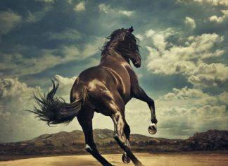 Western Stars, il nuovo album di Bruce Springsteen